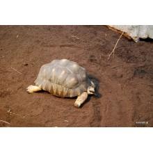 Schildkrötensubstrat  Floragard