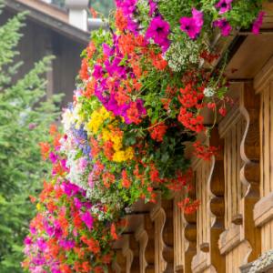 Balkonblumen von Konrath!